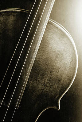 Photograph -  Antique Violin 1732.44 by M K  Miller