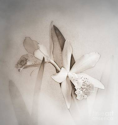 Photograph - Antique White Orchids by Renee Trenholm