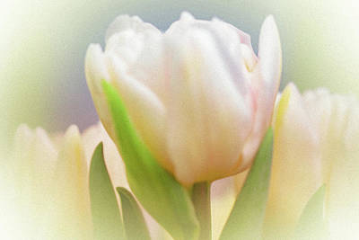 Antiqued Tulip Art Print by Mother Nature