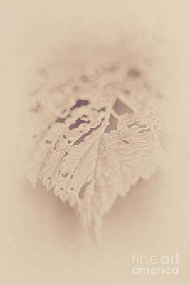 Nikki Vig Digital Art - Antiqued Vintage Leaf Print 2 by Nikki Vig