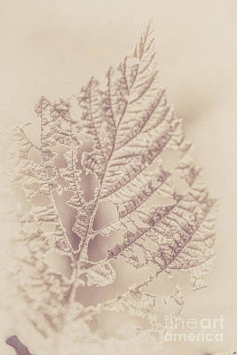 Nikki Vig Digital Art - Antiqued Vintage Leaf Print 1 by Nikki Vig
