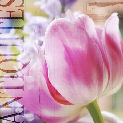 Purple Flowers Digital Art - Antiquites Tulip by Cathie Tyler