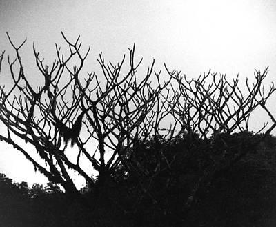 Photograph - Antler Reindeer Shrub by Muyiwa OSIFUYE