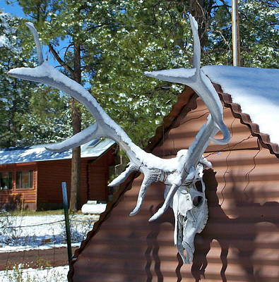 Photograph - Antler With Snow by Pamela Walrath