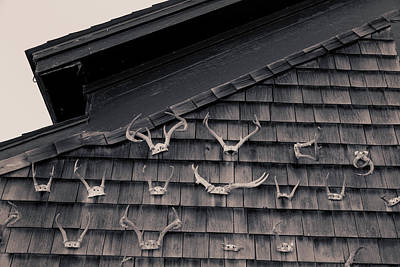 Photograph - Antlers by Fran Gallogly