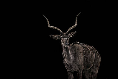 Element Photograph - Antlers by Martin Newman