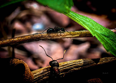 Framed Inspirational Wildlife Photograph - Ants Adventure by Bob Orsillo