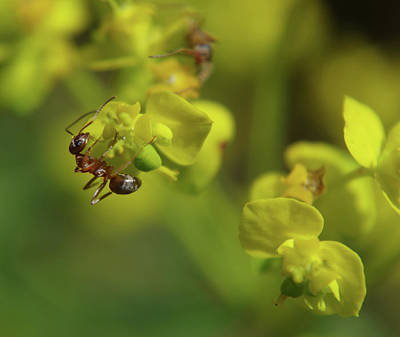 Photograph - Ant's Garden by Adria Trail