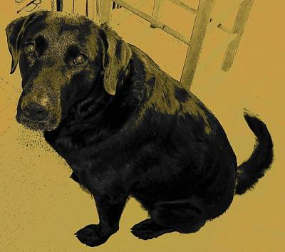 Black Lab Digital Art - Any Chance I Can Go With You by Lenore Senior