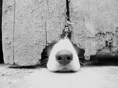 Domestic Animals Photograph - Anyone Out There? by By Jake P Johnson