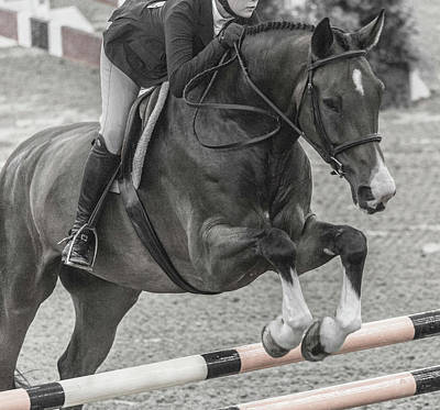 Warmblood Photograph - Anything For You by Betsy Knapp