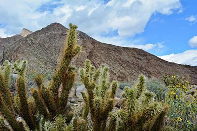 Photograph - Anza Borrego Cactus by Kyle Hanson