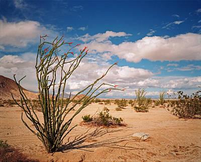 Anza Borrego Desert Art Print