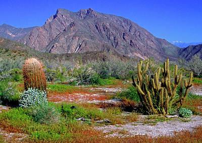 Photograph - Anza-borrego Desert State Park Ca by Gary Corbett