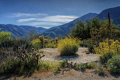 Art Print featuring the photograph Anza-borrego Desert State Park Desert Flowers by Randall Nyhof