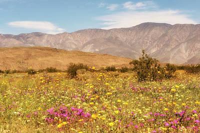 Photograph - Anza Borrego Desrt Flowers by Michael Hope