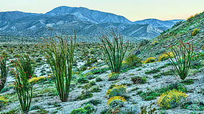 Photograph - Anza Borrego Twillight by Daniel Hebard