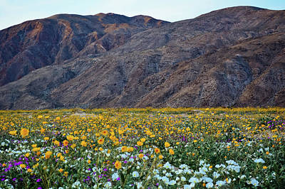 Photograph - Anza Borrego Wildflowers Magic Hour by Kyle Hanson