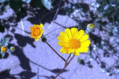 Photograph - Anza Flower by Julia Ivanovna Willhite