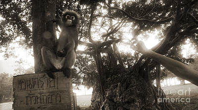 Photograph - Ao Manao Langur Monkey by Nola Lee Kelsey