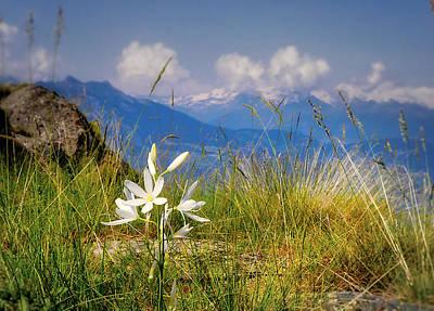 Aosta Flowers Art Print by Jane Selverstone