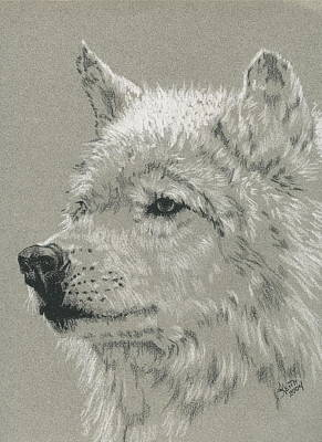 Drawing - Apache by Barbara Keith
