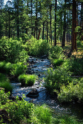 Photograph - Apache-sitgreaves Forest  by Saija Lehtonen