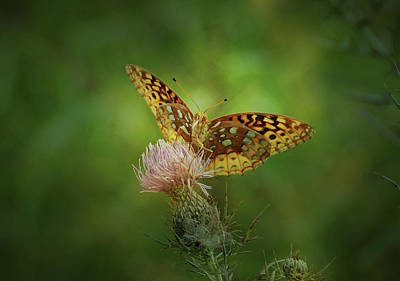 Art Print featuring the photograph Aphrodite Fritillary Butterfly by Sandy Keeton