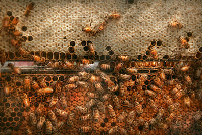Granger Photograph - Apiary - Bee's - Sweet Success by Mike Savad