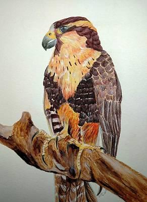 Painting - Aplamoda Falcon by Joan Mansson