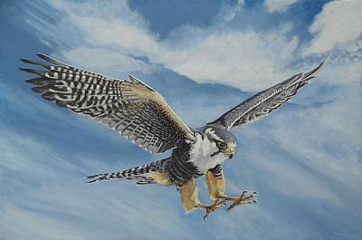 Aplomado Falcon Wall Art - Painting - Aplomado Falcon by Heather Hindle