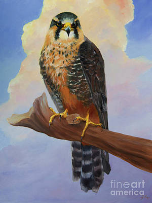 Aplomado Falcon Wall Art - Painting - Aplomado Falcon by Kathryn Whiteford