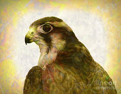 Photograph - Aplomado Falcon by Les Palenik