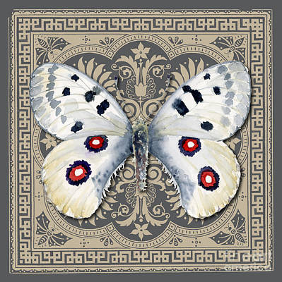 Turkish Painting - Apollo Butterfly Design by Amy Kirkpatrick