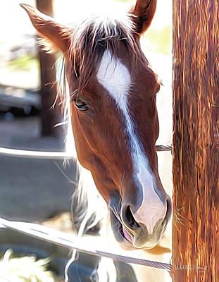 Photograph - Apollo Pony by Walter Herrit