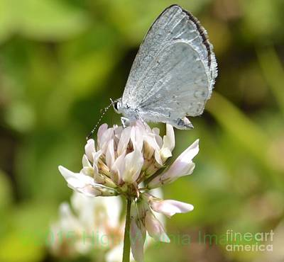 Photograph - Appalachian Azure by Randy Bodkins