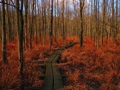 Photograph - Appalachian Trail Boardwalk by Raymond Salani III