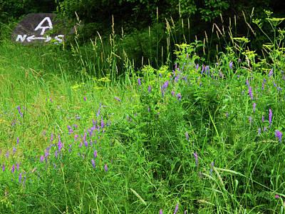 Photograph - Appalachian Trail Connecticut Wildflowers by Raymond Salani III