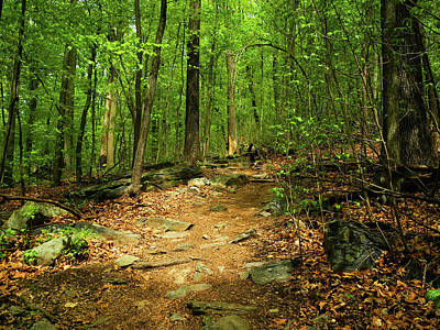 Photograph - Appalachian Trail Down From Weverton Cliffs by Raymond Salani III