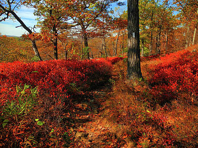 Photograph - Appalachian Trail In Harriman State Park by Raymond Salani III