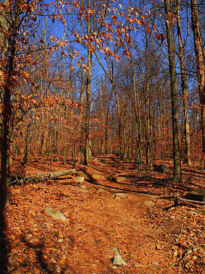 Appalachian Trail In Maryland 4 Art Print by Raymond Salani III
