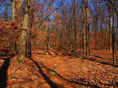 Appalachian Trail In Maryland 5 Art Print by Raymond Salani III