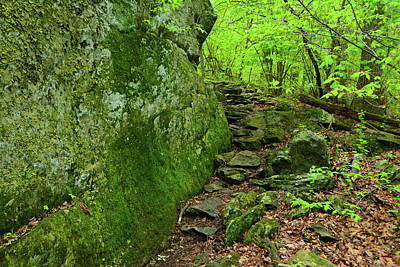 Photograph - Appalachian Trail In Maryland Buzzard Knob by Raymond Salani III
