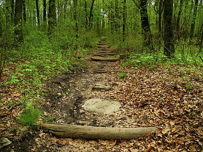 Photograph - Appalachian Trail In Maryland In Early Spring by Raymond Salani III