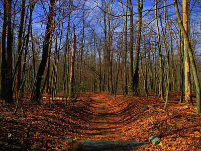 Photograph - Appalachian Trail In Maryland by Raymond Salani III