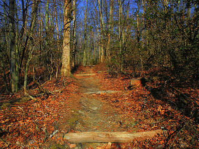 Appalachian Trail In Maryland Steps Art Print by Raymond Salani III