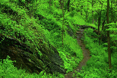 Photograph - Appalachian Trail In West Virginia 2 by Raymond Salani III