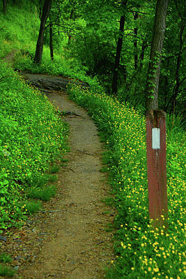 Photograph - Appalachian Trail In West Virginia by Raymond Salani III