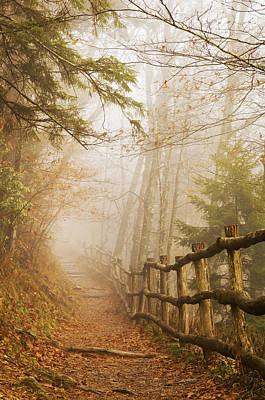 Photograph - Appalachian Trail by Jill Love
