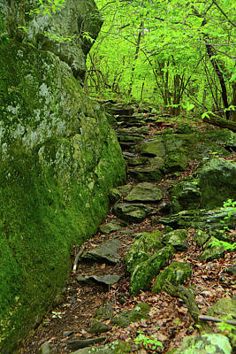 Photograph - Appalachian Trail Maryland Rock Garden 2 by Raymond Salani III